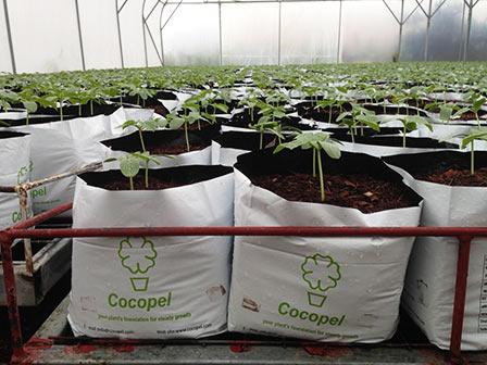Open Top Grow Bags
