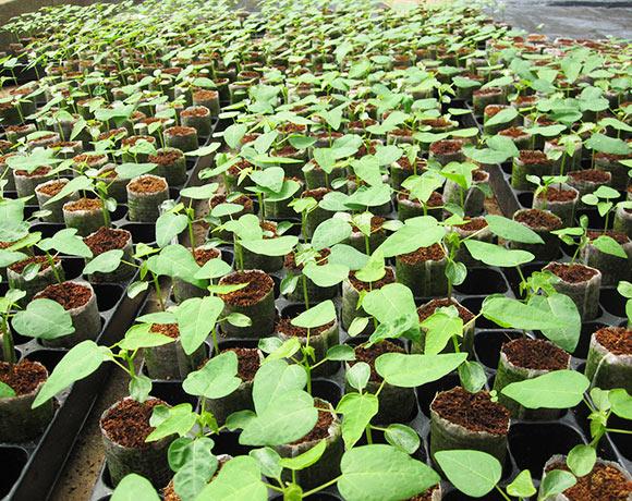 Grow pellets in trays